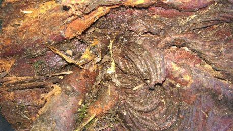 Knobbly and twisted bark