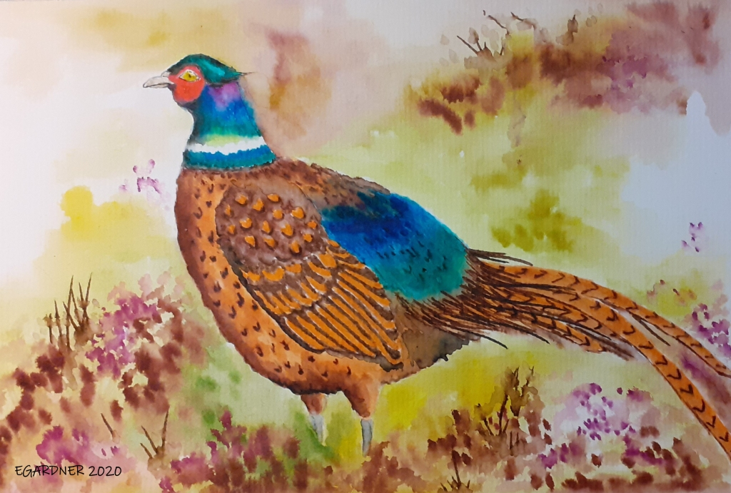 Pheasant, 2020 (Watercolour)