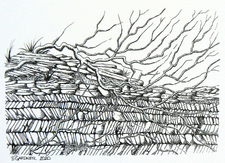 Detail of a Cornish Wall, 2020 (Ink Pen)