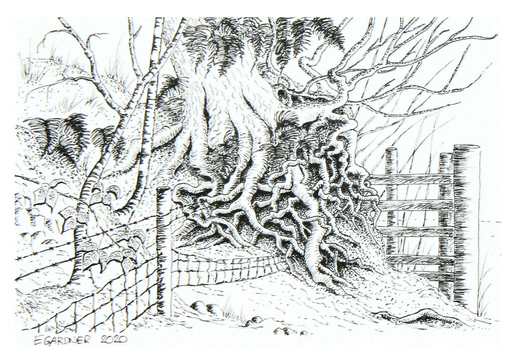 Woodford Hedgerow, 2020 (Ink Pen)