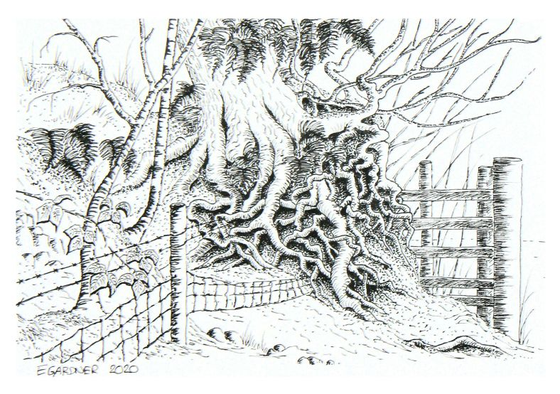 Stories - Woodford Hedgerow, 2020 (Ink Pen)