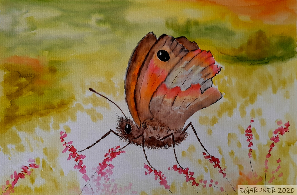 Meadow Brown, 2020 (Watercolour)